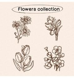 Flowers sketch elements vector image vector image