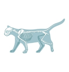 Cat skeleton veterinary vector