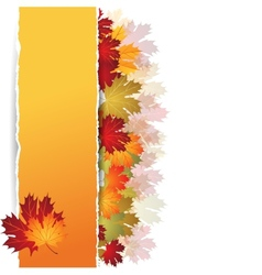 Autumn maple leaves background vector
