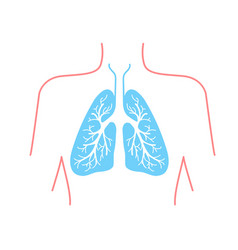 icon of the human lungs vector image