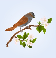 Sparrow bird on a branch of an apple tree vector