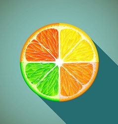 Icon citrus Stock vector image vector image