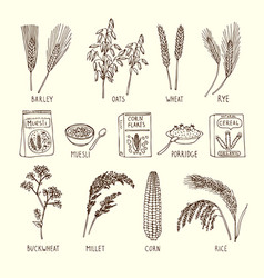 Set of different cereals muesli wheat vector
