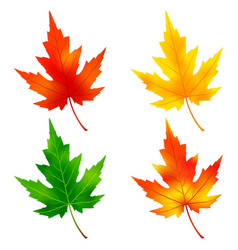 Set of colorful maple tree leaf vector