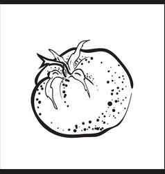 Hand drawn sketch tomato vector