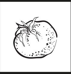 Hand drawn sketch tomato vector