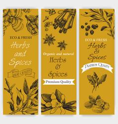 Background sketch herbs card - bay leaf vector