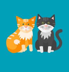 portrait cat animal pet cute kitten purebred vector image