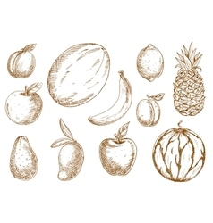 Organically grown tropical garden fruits sketches vector
