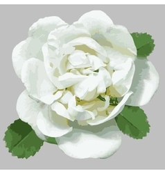 White wild rose for design vector
