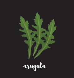 arugula herb on black background vector image vector image