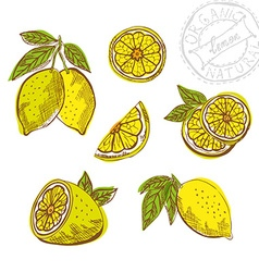 hand drawn lemon fruits vector image