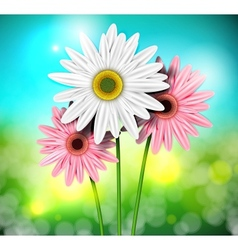 Natural background with gerberas vector image vector image