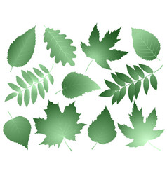 vintage collection of leaves and branches vector image