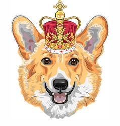 Dog pembroke welsh corgi breed in gold crown vector