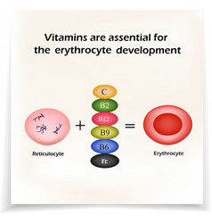 Vitamins are essential for the development of red vector image vector image