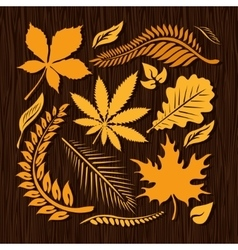 Autumn leaves collection vector