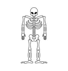 Skeleton on white background skull and bones dead vector