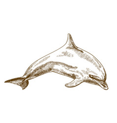 engraving drawing of jumping dolphin vector image vector image
