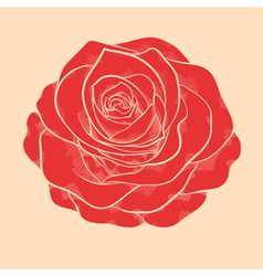 red rose in a hand-drawn graphic style vector image