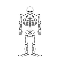 Skeleton on white background skull and bones dead vector