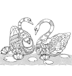 Swan coloring book for adults vector