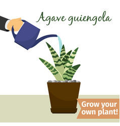 Hand watering agave plant vector