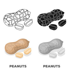 Peanut in the shelldifferent kinds of nuts single vector