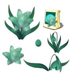 Seeds stages of growth and wilting green flowers vector