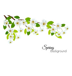 Spring background with white flowers vector