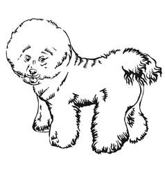 decorative standing portrait of dog bichon frise vector image