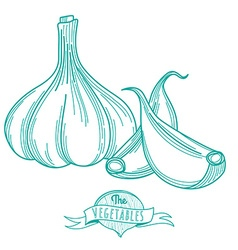 Outline hand drawn sketch of garlic flat style vector