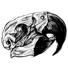 Macaw skull vector