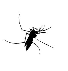 Silhouett of mosquito vector