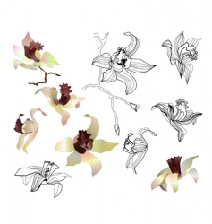 Orchid branch set vector