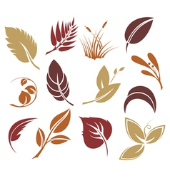 Collection colourful autumn leaves vector