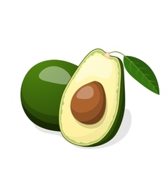 Avocado isolated on white background vector image vector image