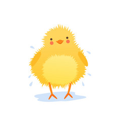 Cute baby chicken shaking water after bathing vector