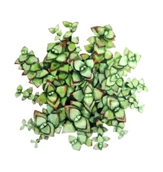 Watercolor green succulent vector