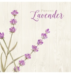 Laveder over wooden panels vector image