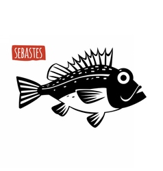 Sebastes black and white vector