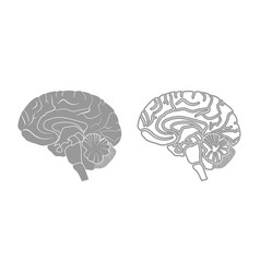 brain icon grey set vector image vector image