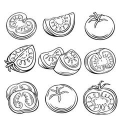 Hand drawn tomato set vector