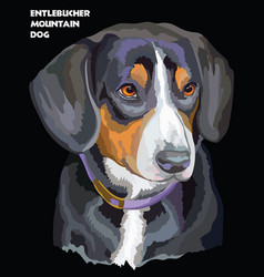 entlebucher mountain dog colorful portrait vector image