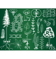Biology plant sketches on school board vector
