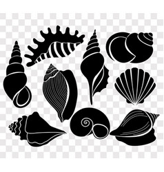 set of beautiful sea shells vector image vector image