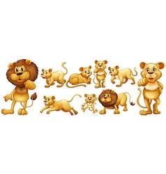 Set of wild lions vector image vector image