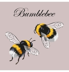 Set of bumblebees vector