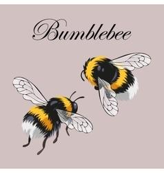Set of bumblebees vector
