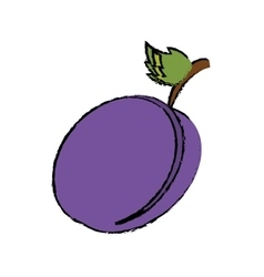 Drawing plum organic fruit vector